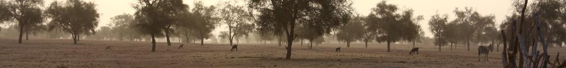img_1798-banniere-savane-1-image